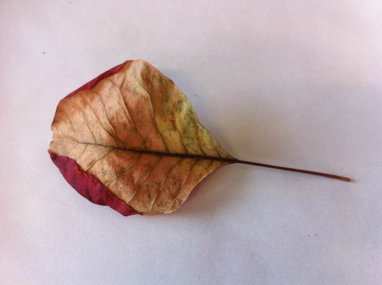 of leaves_4